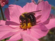 beautiful bumble