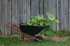 wheelbarrow with pumpkins