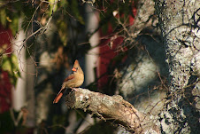 mrs. cardinal
