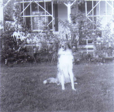 Lassie in California - circa 1954