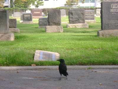 a Woodlawn crow