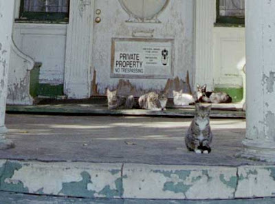 West Adams House - Cats
