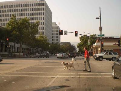 Pasadena Dog Walker