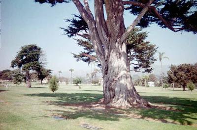 Santa Barbara Cemetery - Part Three