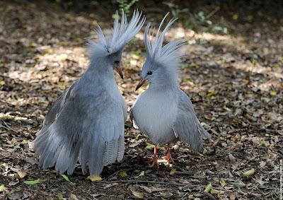 http://2.bp.blogspot.com/_qsrT_muWei8/Sh8bc8DtdDI/AAAAAAAABbU/_oAMV5Yhl2w/s400/galerie-membre,oiseau-cagou,-dsc4473.jpg
