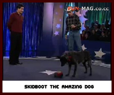 Amazing Video : Skidboot the The Amazing Dog