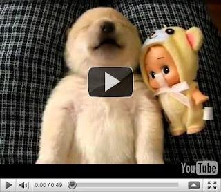 Pet Videos