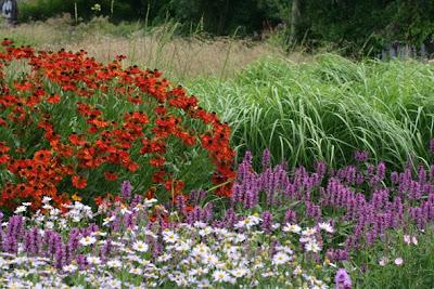 Shirls gardenwatch piet at pensthorpe for Piet oudolf plant list