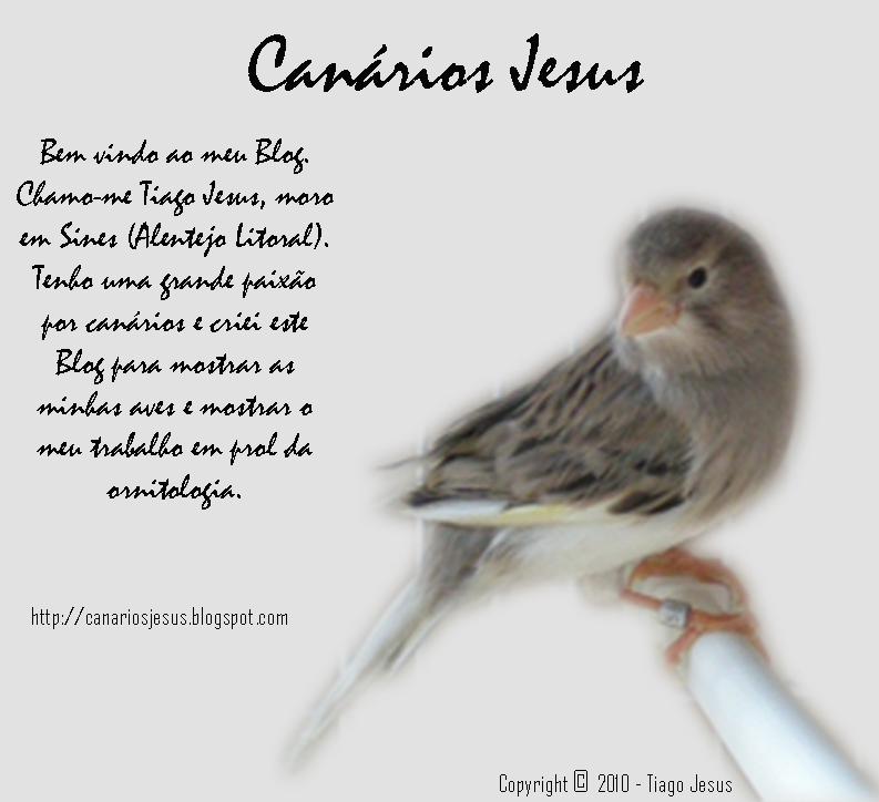 Canário Jesus