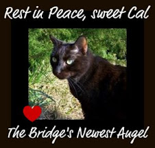 Remembering sweet Cal