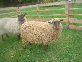 [Sheepies+002.JPE]