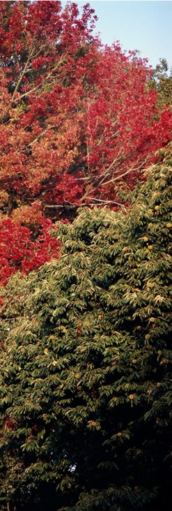 [Outono+S01.jpg]