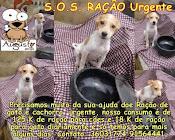AMIGOSS DO BICHO