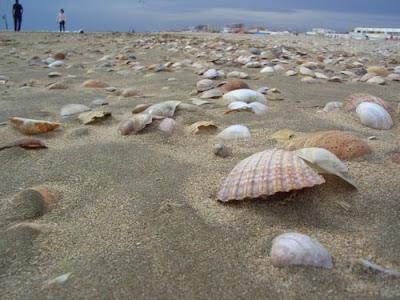 Playa Punta Umbria