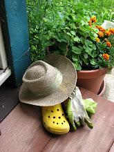 Barefoot Gardener Blog