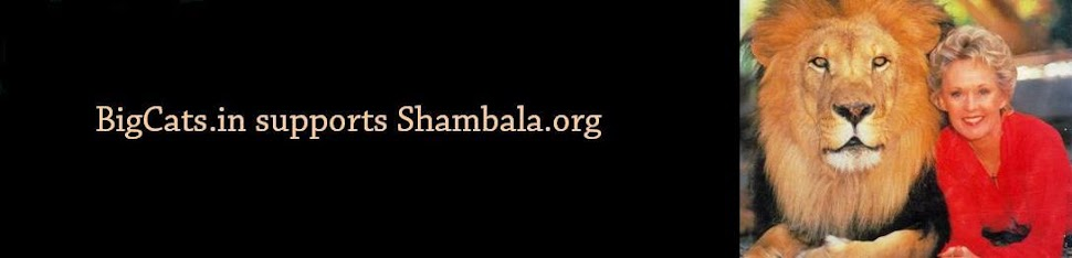 Support shambala preserve founded by Tippy Hedren - Big Cats Heaven in California