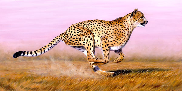cheetah.bigcats.in