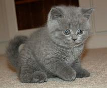 Toby Mac as a Kitten