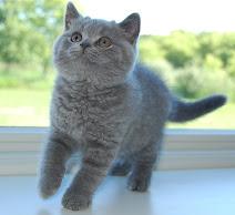 Toby as a kitten.
