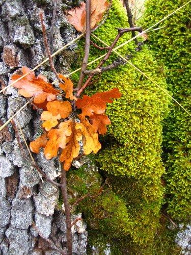 [leaves+moss]