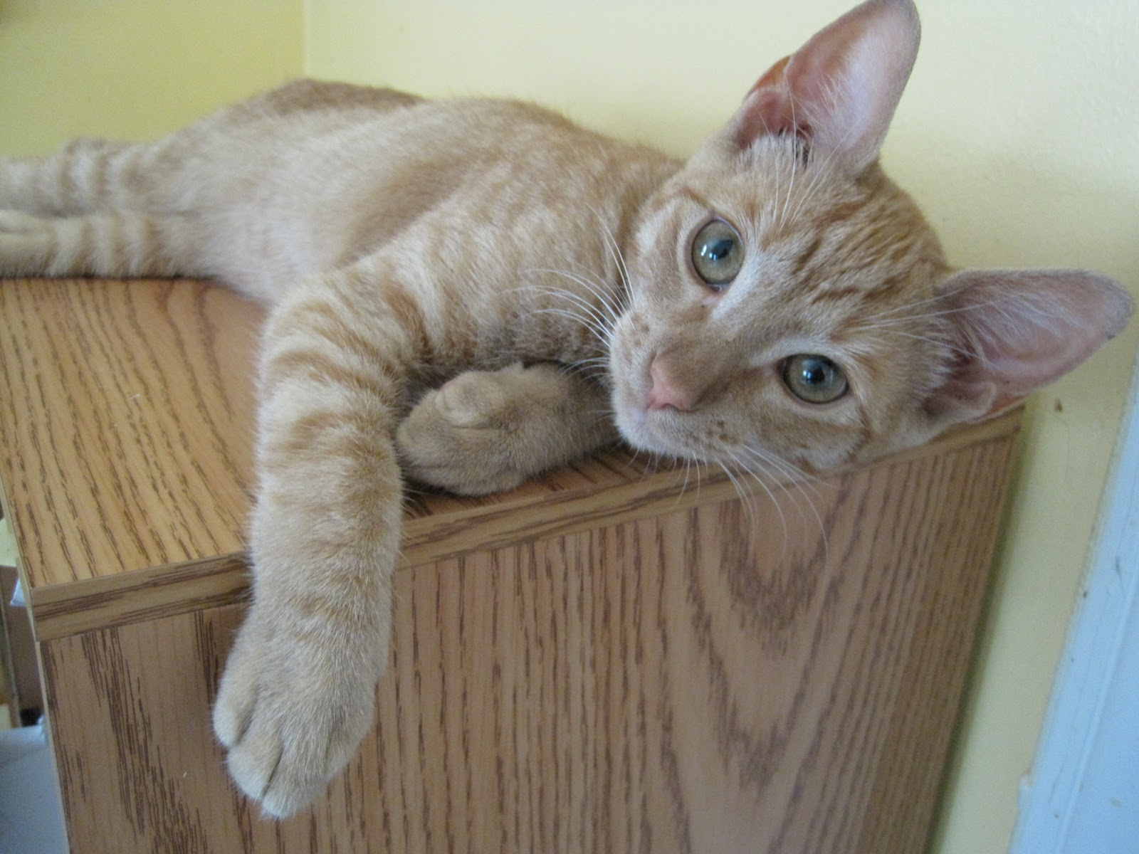 About - Alley Cat Rescue