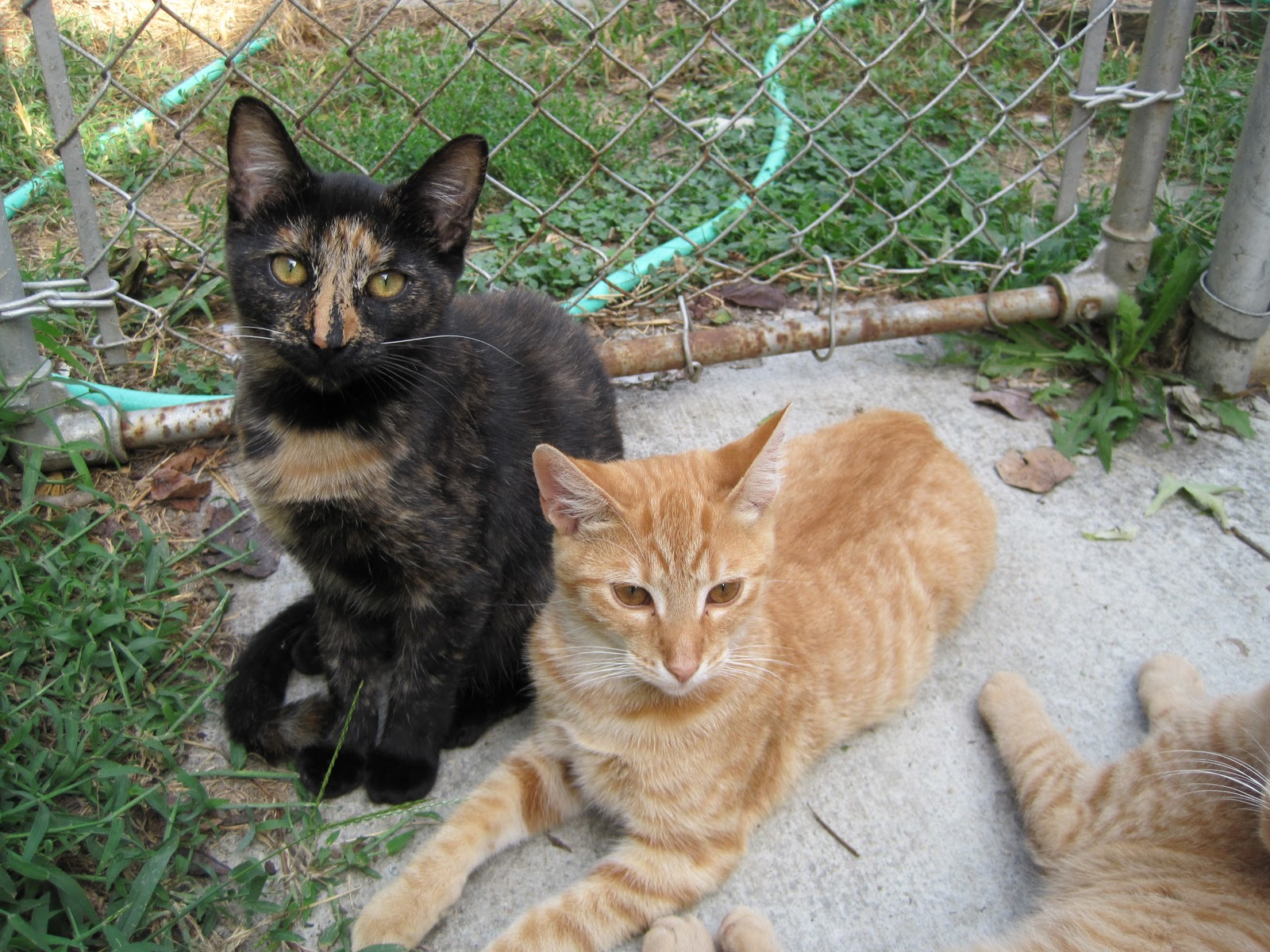 Alley Cat Rescue's Guide to Managing Community Cats by ...