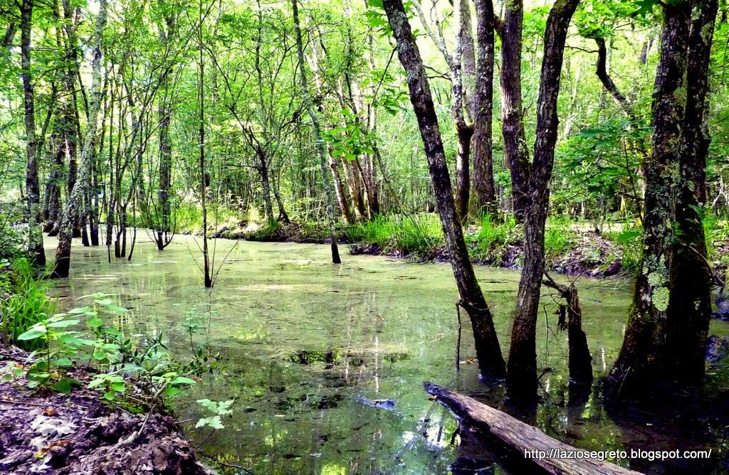 Vivaio Forestale Lazio : Pioppicoltura vivaio olocco sommariva del bosco via canale
