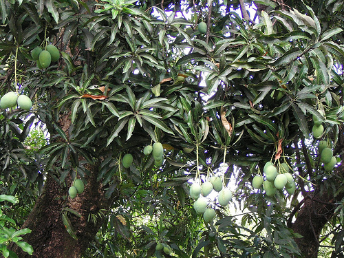 [manguier.jpe]