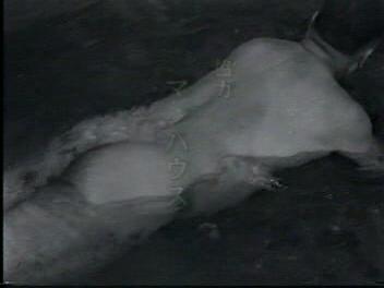 sekx filmi porn sex film