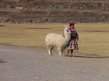 des lamas sur tous les sites incas