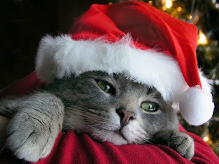 Cristmas Cat || Top Wallpapers Download .blogspot.com