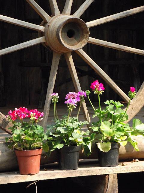 foto de vasos de flores tendo uma roda de carreta ao fundo