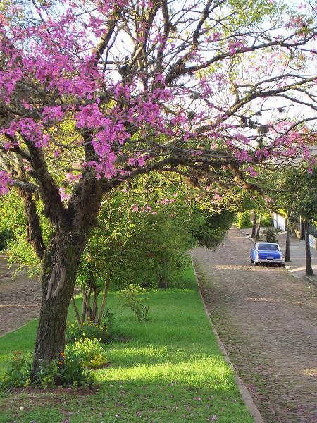 Avenida Dr Alberto Vianna Rosa, no bairro Protásio Alves, em Porto Alegre, RS, Brasil