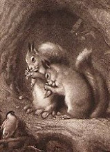 I Love Squirrels!