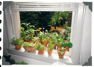 I Have Also Tended Two Container Gardens, When I Lived In Urban Apartments. My  First Garden, Shown In These Photographs, Was In The Windows Of A Small ...