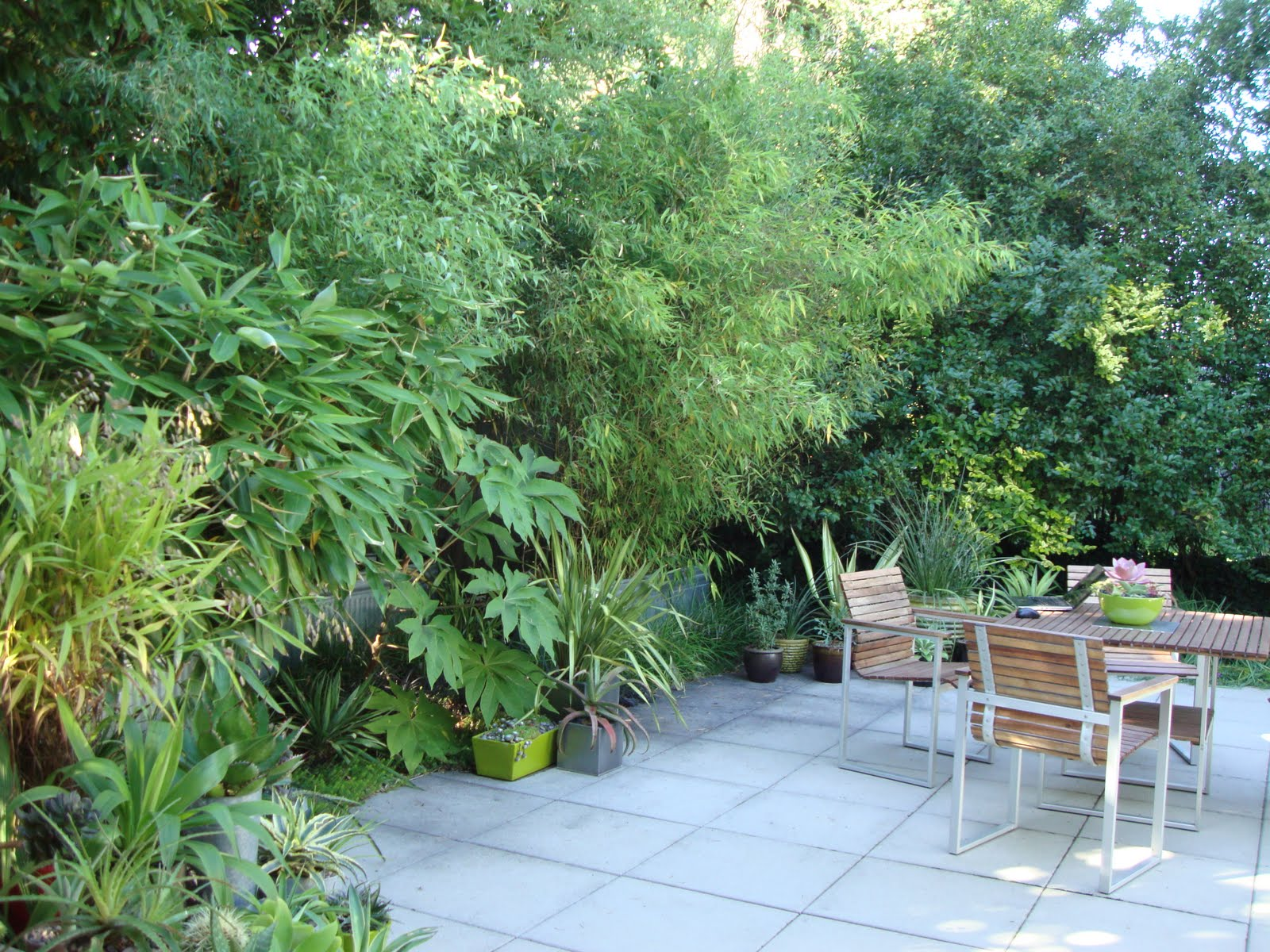 bamboo privacy garden danger garden: Bamboo = green privacy