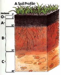 Equipo 5 el suelo y su importancia for El suelo y sus capas