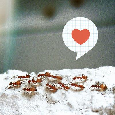 texto informativo sobre las hormigas