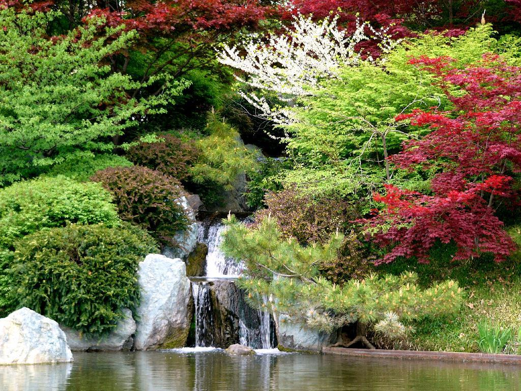 Paisajes naturales y animales en su habitat taringa for Arboles para jardin japones