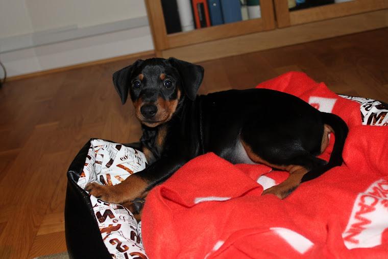 Dexter i sin nya korg!