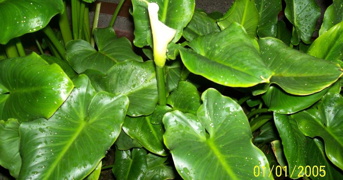 Proyecto de plantas ornamentales cartucho for Proyecto de investigacion de plantas ornamentales