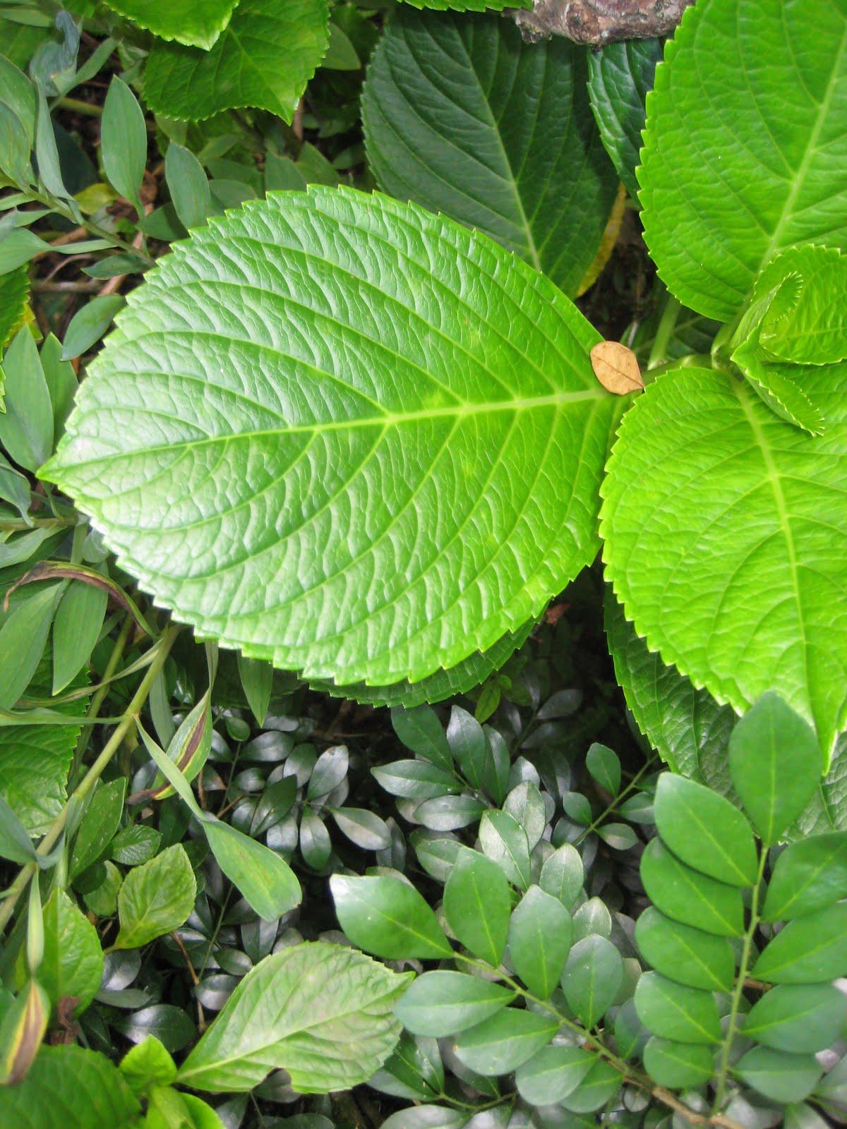 Proyecto de plantas ornamentales for 2 plantas ornamentales