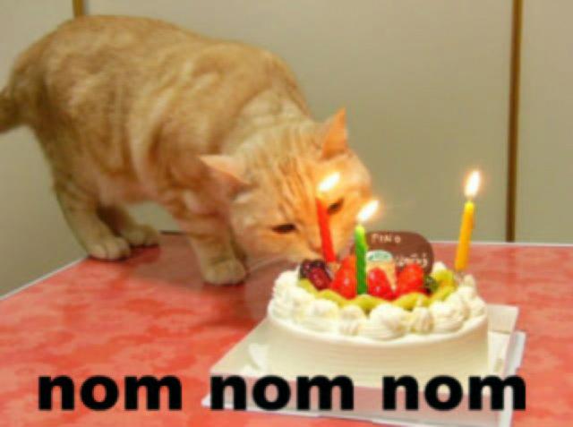 [Image: birthday%2Bcat.JPG]