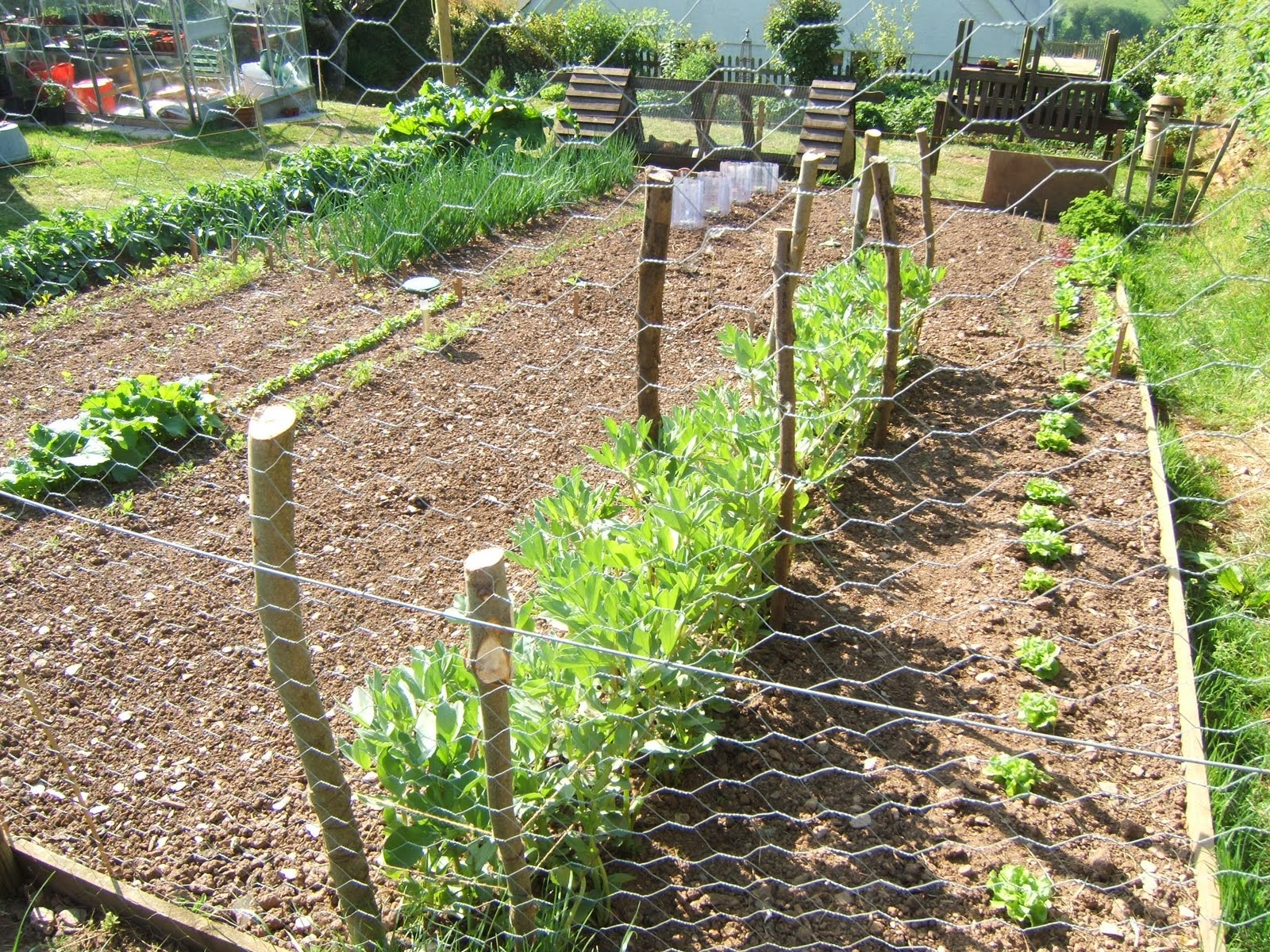 A year in the life of vegetable patch for Vegetable patch