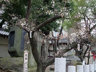 大阪天満宮の境内の梅