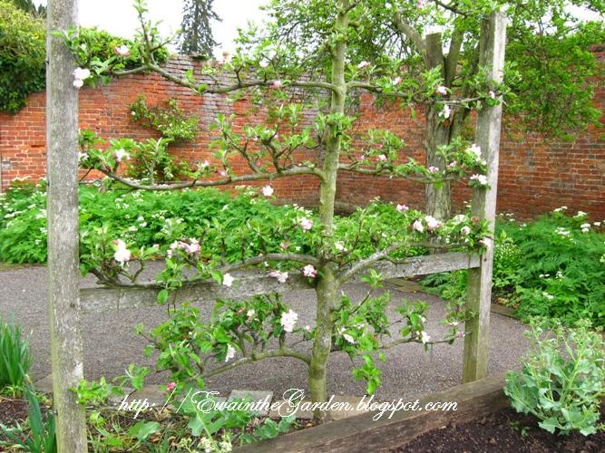 Ewa in the Garden 22 Pictures of English Vegetable Garden