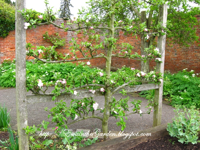 Ordinary Cute Vegetable Garden Ideas Part - 13: Cute Ideas For Supporting Plants - Use Twiggs From Your Own Garden.