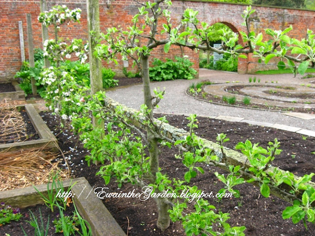 Ewa in the Garden: 22 Pictures of English Vegetable Garden