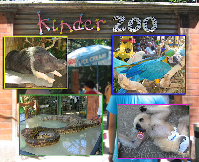 the plight of manila zoos elephant Manila zoo: depressing reproduction whilst at the same time educating the public to the plight of many habitats and mali the elephant has a.