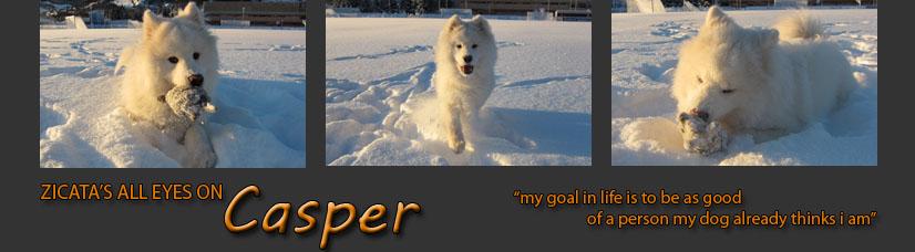Et hundeliv - Casper og Nova